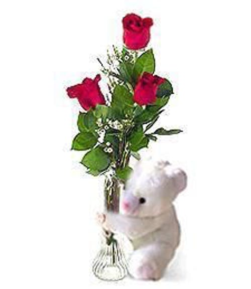 Red Long Stem Roses and a Teddy Bear!